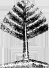 tree woodcut